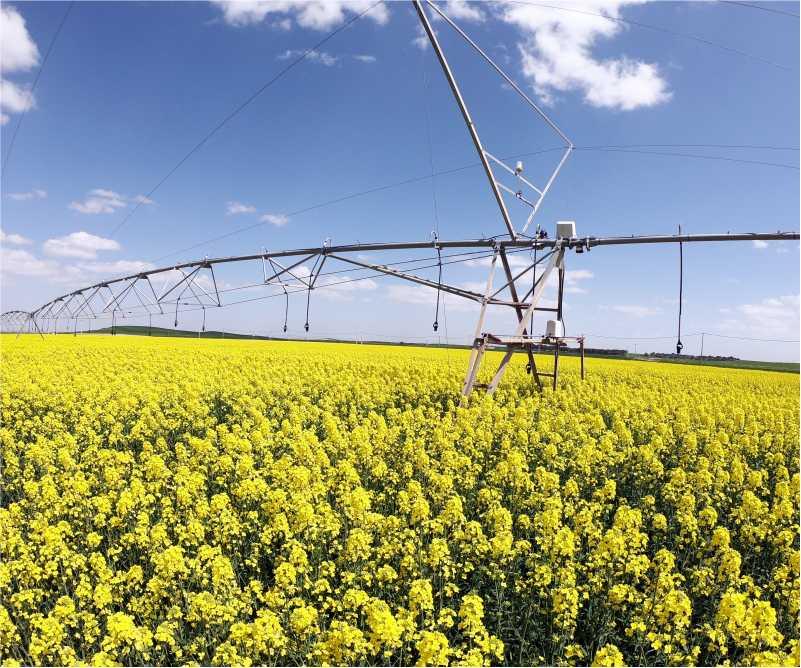 Campo de colza en bombeo solar evosol